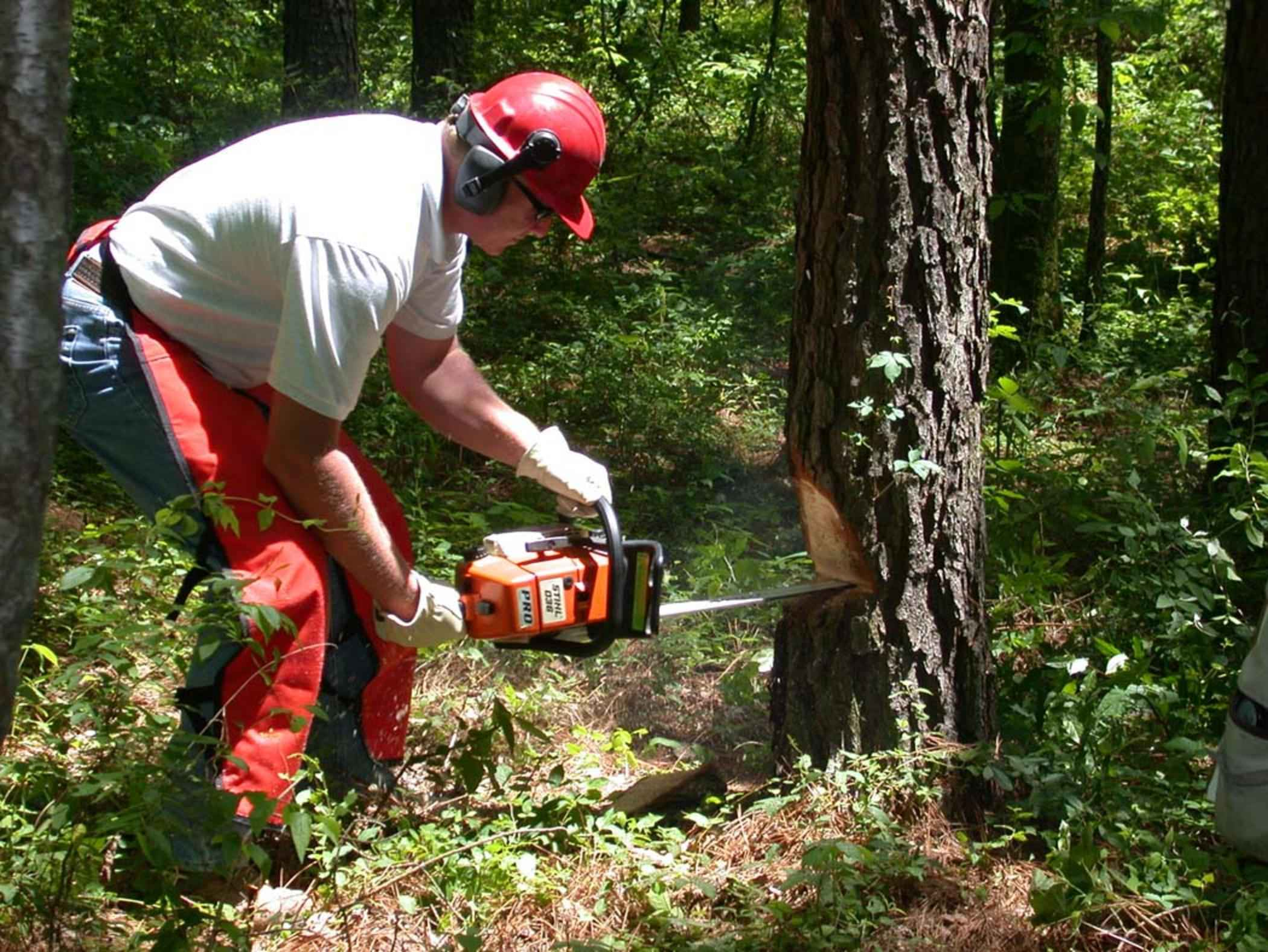 cut safely with a chainsaw