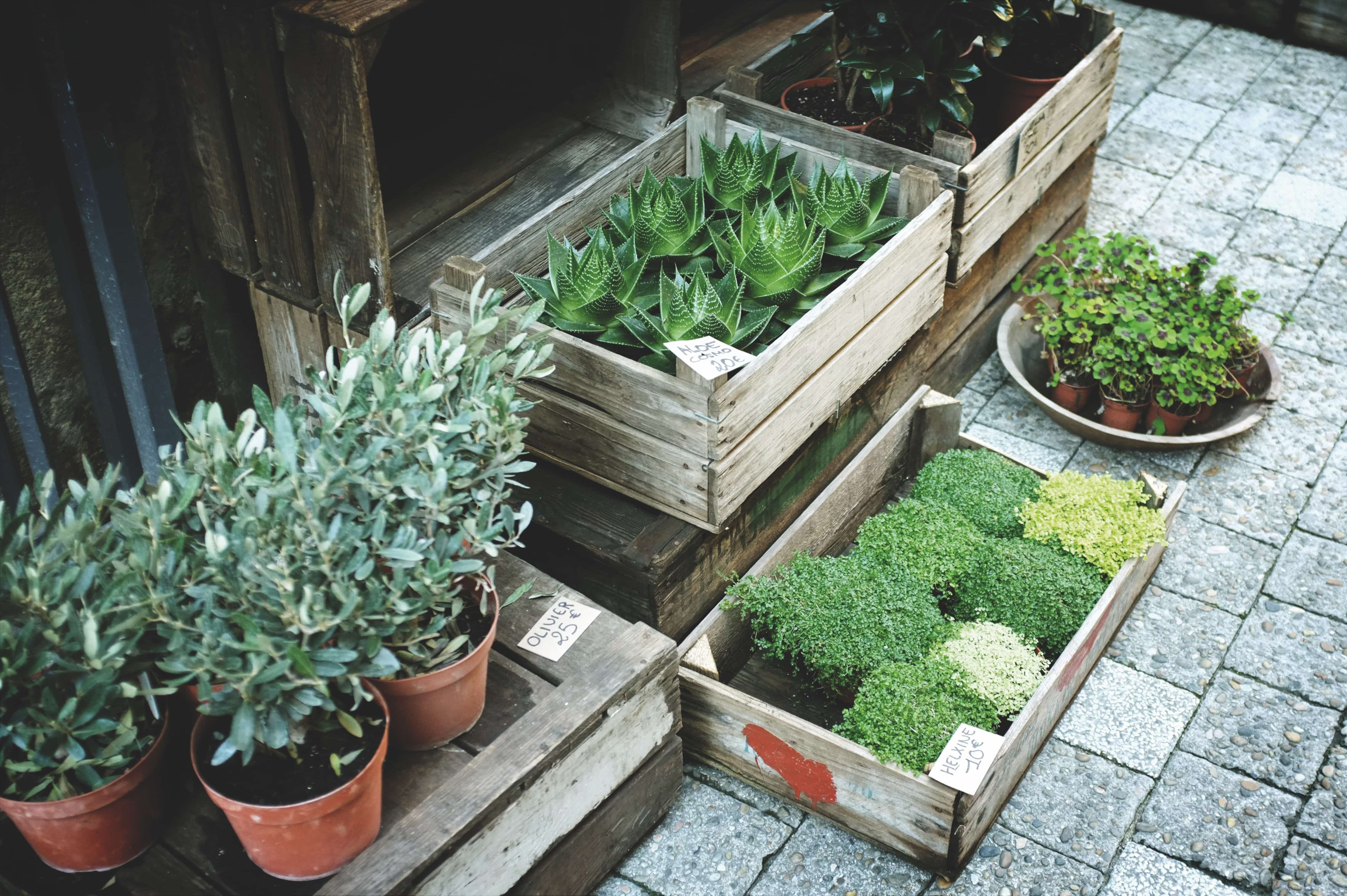 pallet crate with plants