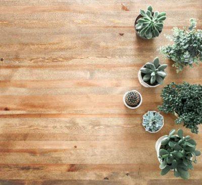 succulents on a wooden floor