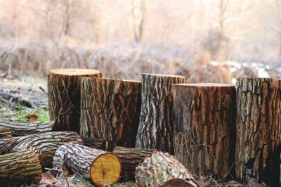 thick brown logs