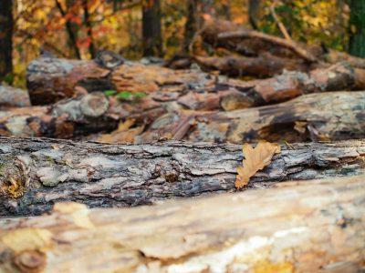 maple logs