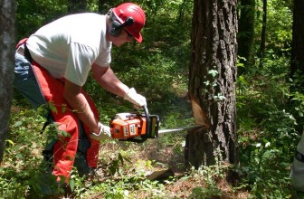 How to Safely Use a Chainsaw